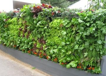 vertical-vegetable-garden-urban-agriculture