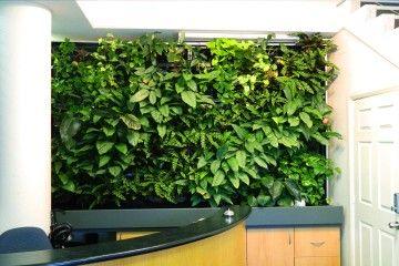 green-wall-vertical-garden-atlantis