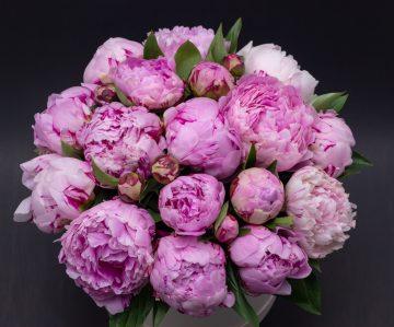 flower box peonie sfera zieleni